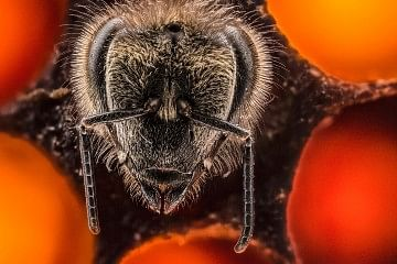 anand_varma_bees_timelapse_featured