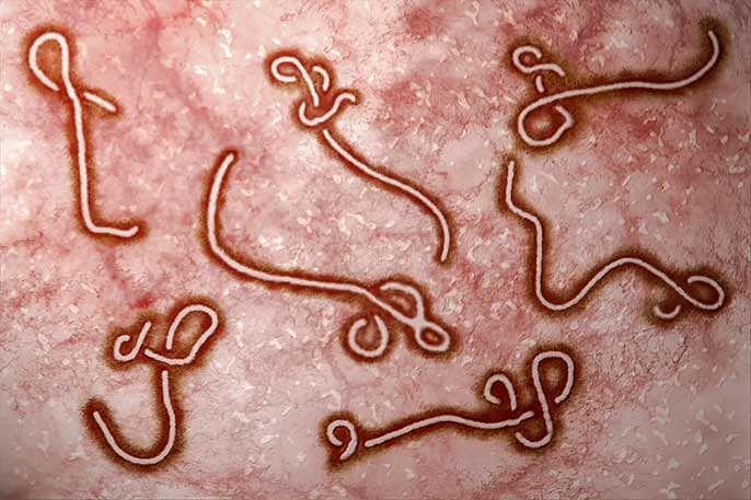 ebola_virus_istock