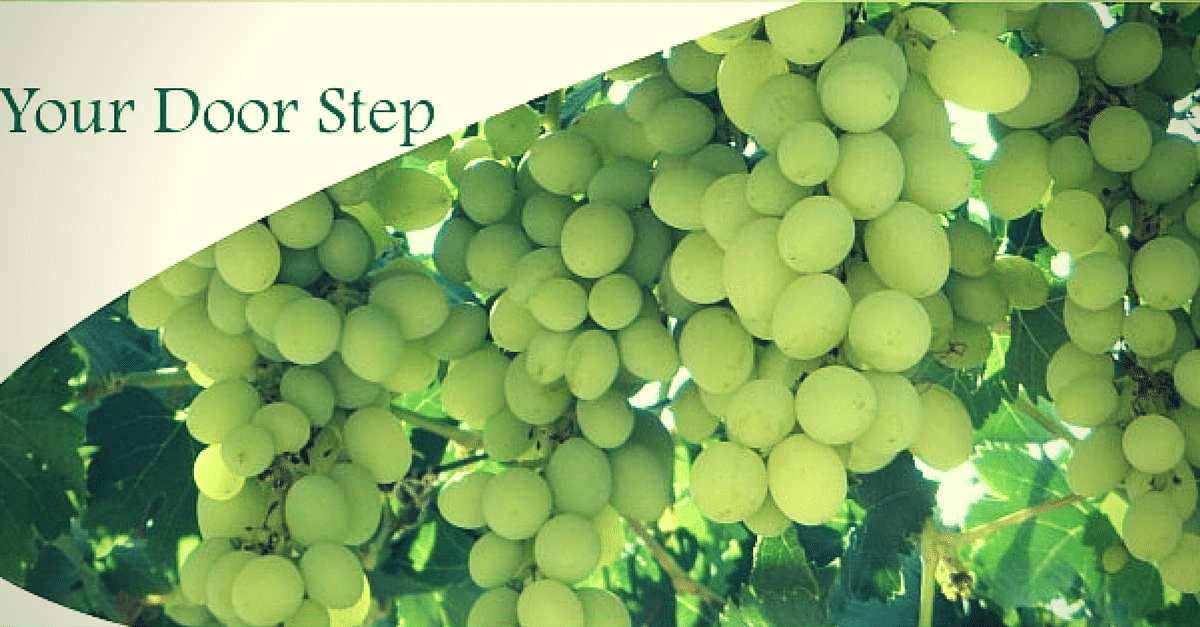 QUICK BYTES: Small farmers in Nashik are now using the Internet grape vine