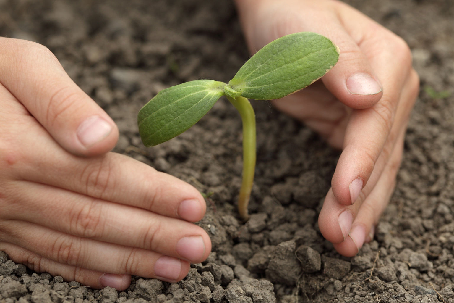 Bengaluru Teens Spend Pocket Money to Plant Saplings Every Month