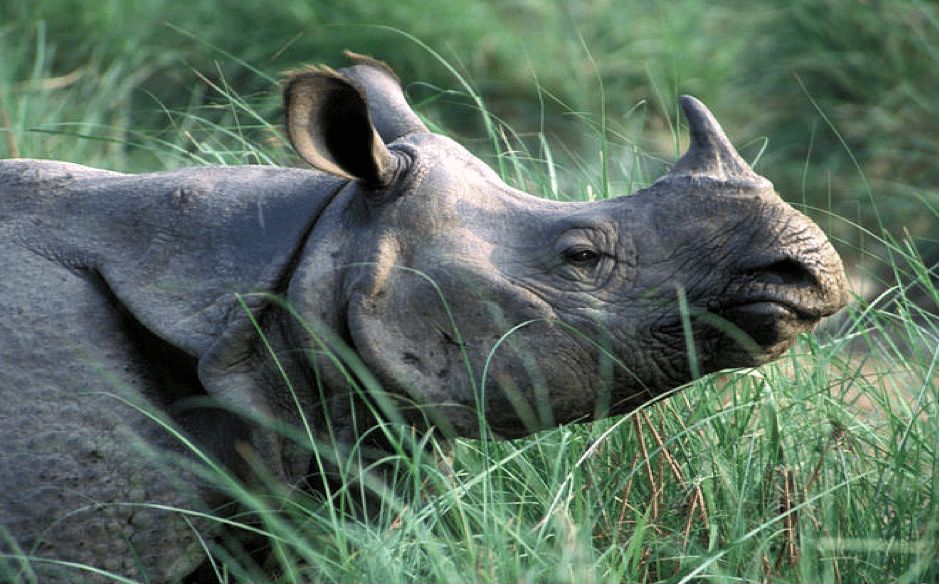 7 Rare and Exotic Wildlife Species that can be found in ...