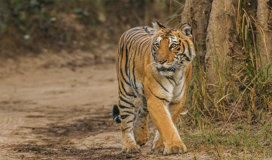 Mammals wild animal best blog: Famous wild animals in india