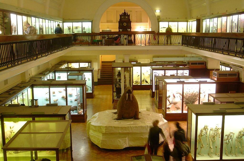 Horniman_Museum_interior