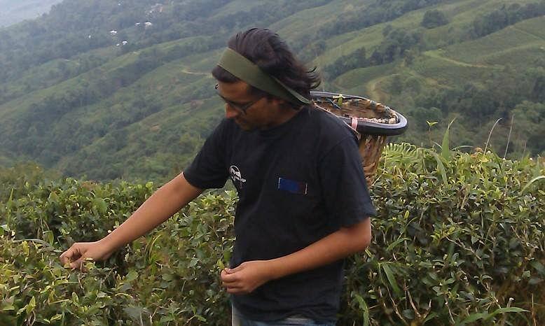 Job 20, Tea factory worker, Assam.