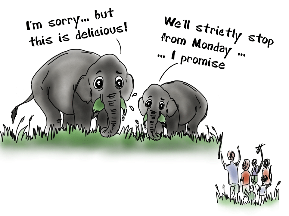And certainly, when big animals such as elephants run into farms, find delicious crops, they eat. And even if they aren't eating, but just crossing through a farmland, they end up damaging a large chunk of the crops. This is what we call conflict.