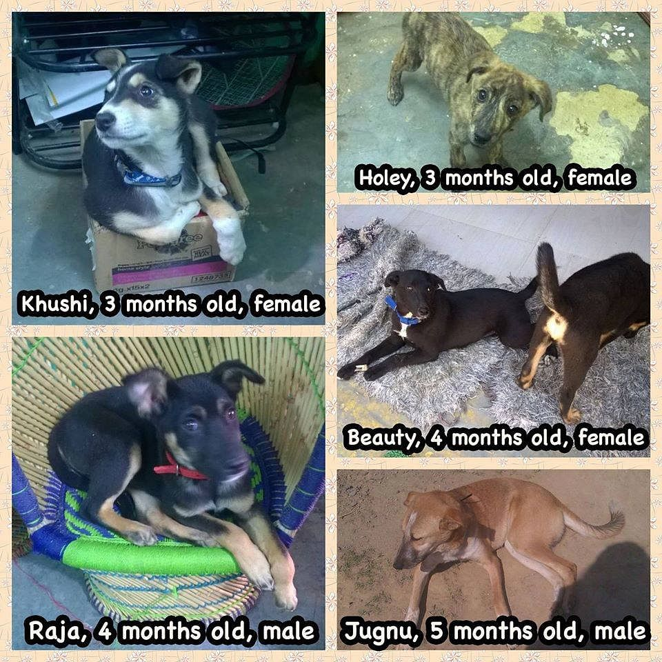 Various stray dogs that are up for adoption