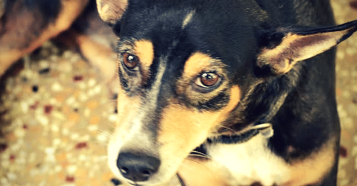 MY STORY: What a Little Puppy Called Gobi Gray Taught Us About Stray Dog Adoption in India