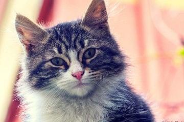 cat_f