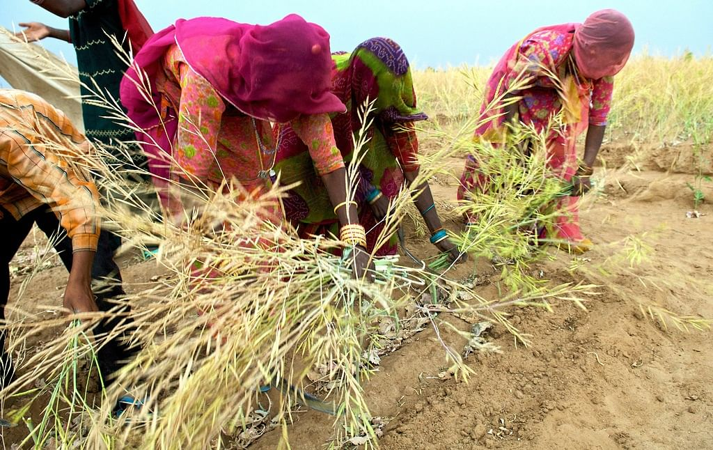 Agriculture – The Better India