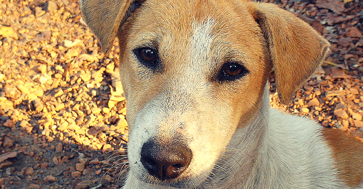 A Mute Stray Dog Risks his Own Life to Help the Residents of a Delhi Locality