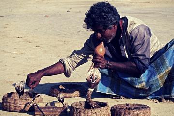 snake charmer - Nagpanchami
