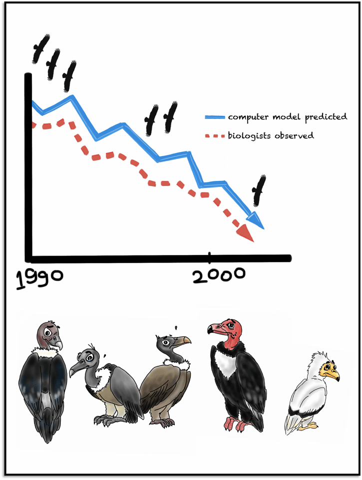 Scientists used computer models to predict what the decreasing population trend should look like if it was in fact Diclofenac that was killing our vultures. They observed that the decrease in real-life was identical to the computed predictions. The Oriental White-Backed Vulture, Slender Billed Vulture and Indian Vulture were most affected. Later, it was seen that the Red-Headed Vulture and Egyptian Vulture weren't far behind!