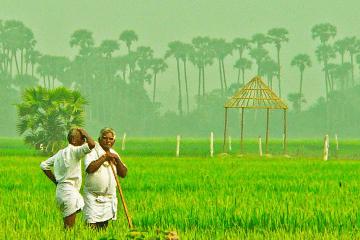farmers_F