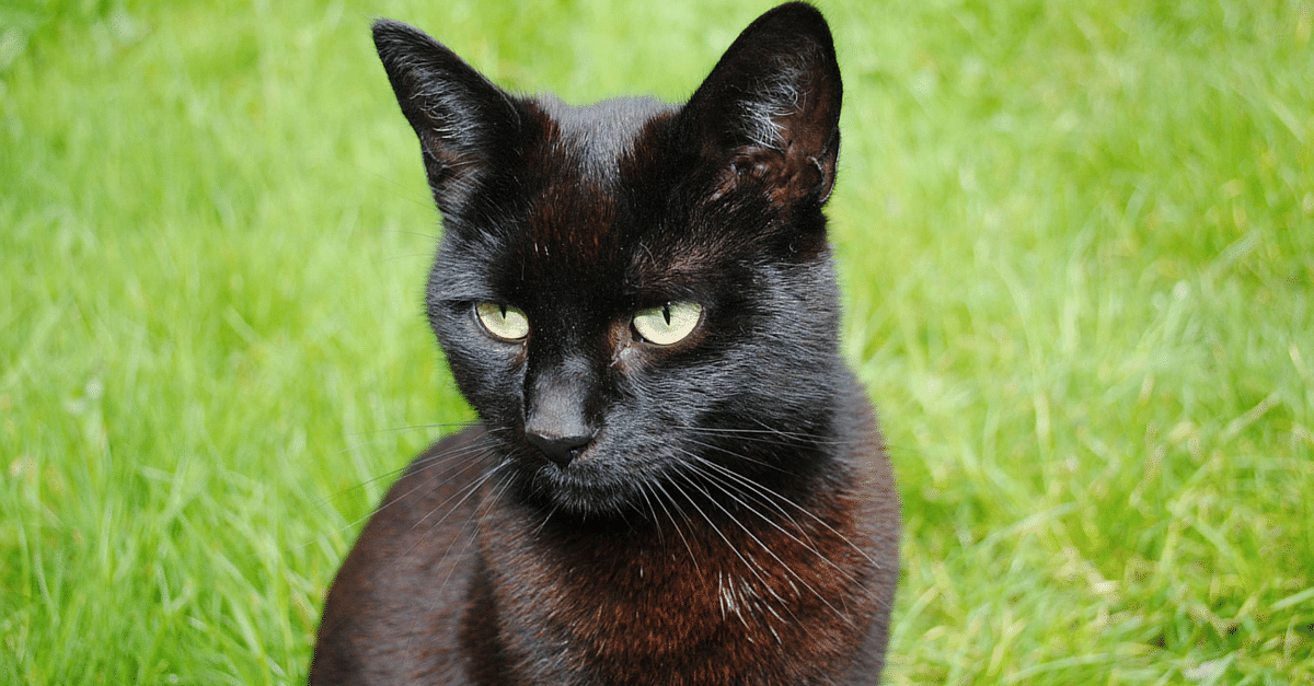 In Pictures: 5 Perfect Answers to Ridiculous Superstitions