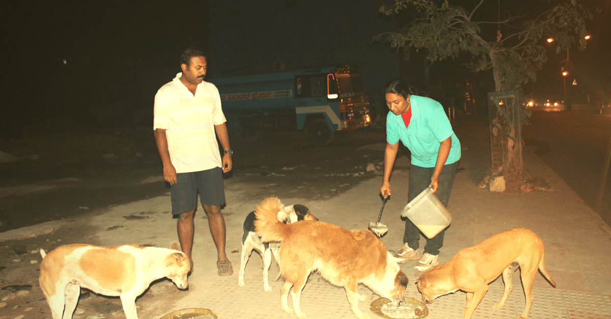 This Couple Found a Surprisingly Simple Way to Tame 120 Aggressive Stray Dogs – Just Feed Them!