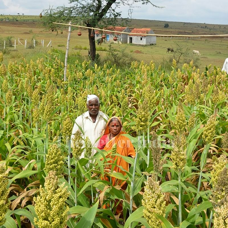 While others' crops failed, Ashok's farm flourished.