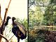 vulture_f