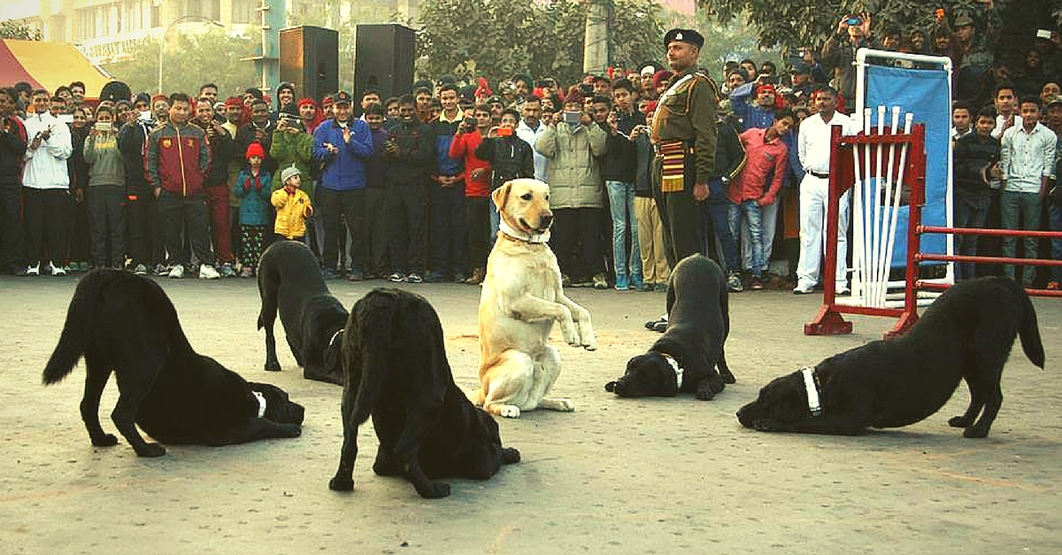 For the First Time After 26 Years, Army Dogs Will Feature in the Republic Day Parade