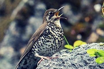 bird fb