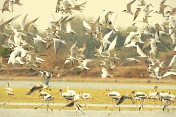 birdcount_f