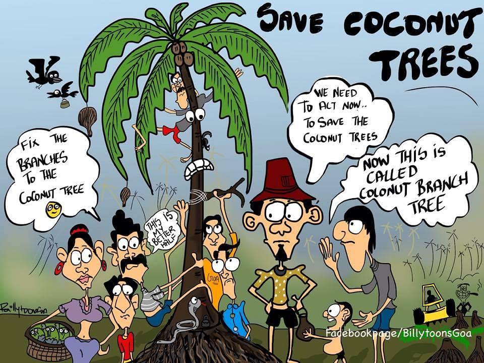 cocnut 1