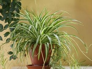 10 Indoor Plants That You Can Grow in Your House Right Now! - The