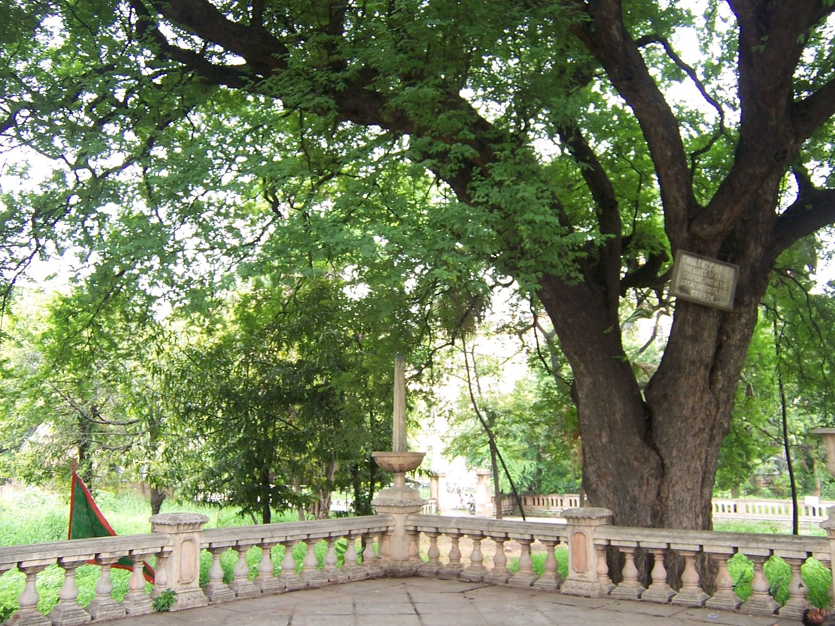 The tamarind tee in Osmania Park, which saved lives during the 1908 floods