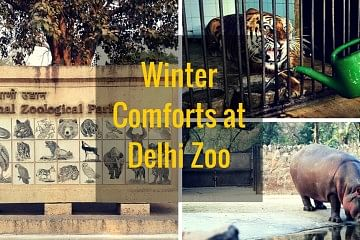 Delhi zoo winter