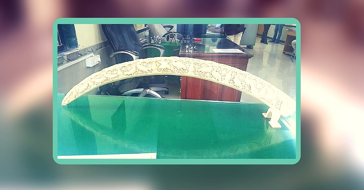 Mumbai Police Seize 100-Year-Old Elephant Tusk Worth Rs. 2 Crore. By Posing as Buyers.