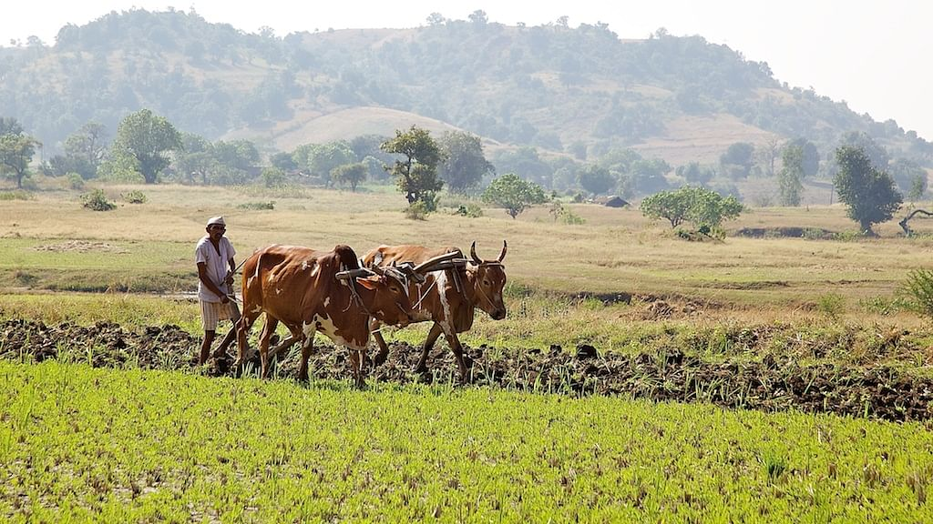Image result for farmers in maharashtra