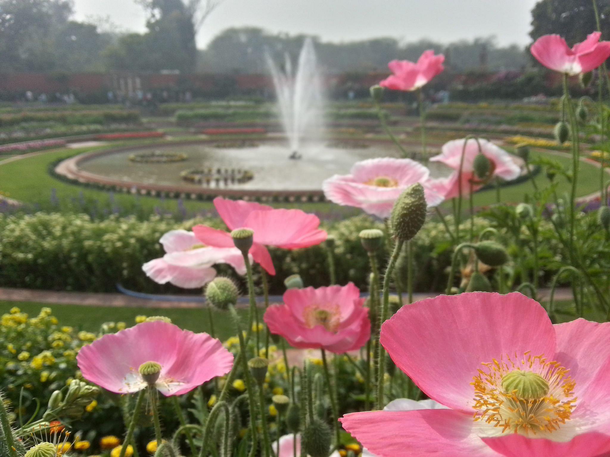 mughal gardens5