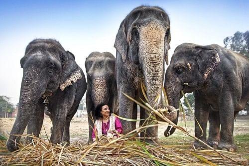 Geeta Seshamani with the elephants at the sanctuary