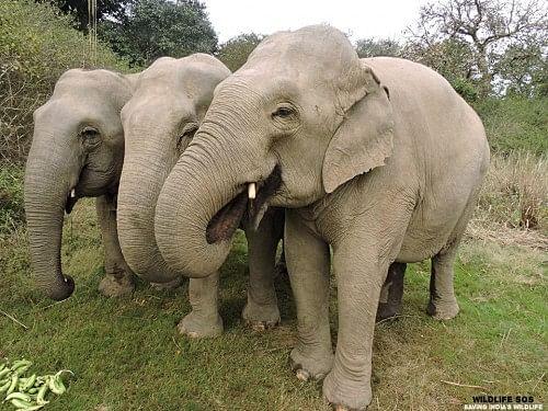 Elephants at the sanctuary in Haryana
