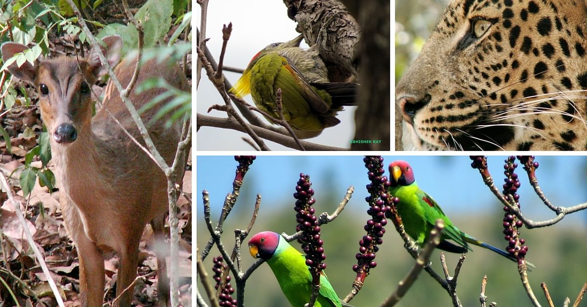 Wildlife and birds at the Reserve