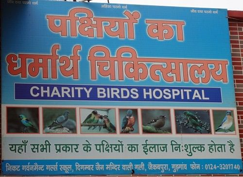 The Board outside this bird friendly institution Photo Credit: Ugain Jain