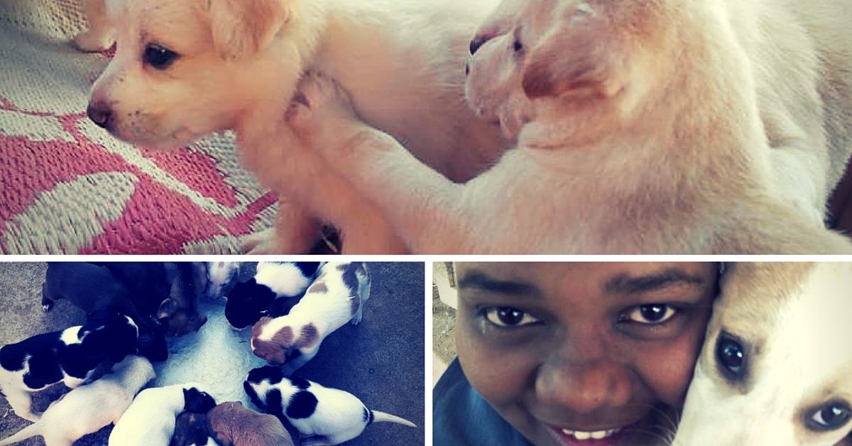This Woman Rescued 44 Dogs from the Streets and Is Raising Them in Her House. Here's Why!