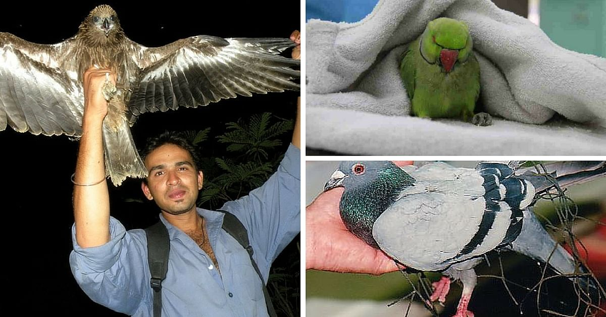 Birds Also Suffer from Paralysis, Chicken Pox & More. And Go to This Hospital for Free Treatment.