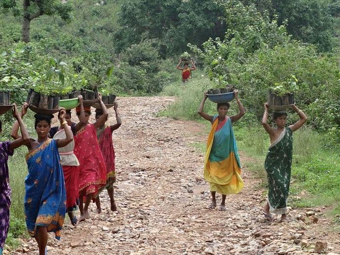 Women carrying saplings to plantation site_Chikalamari (Kondha)