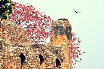 delhi_f