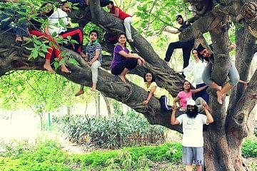 tree_f