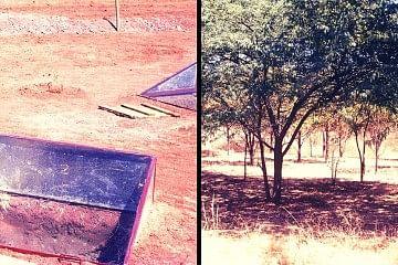 trees_f