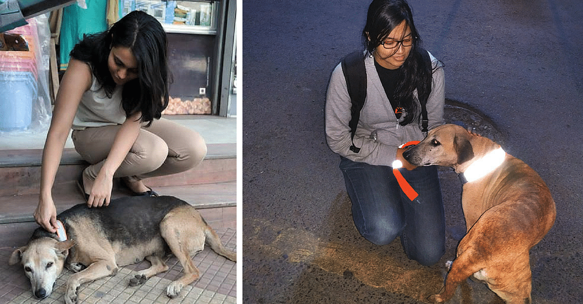 Chennai NGO's Reflective Collars Save Dogs & Cattle From Being Run Over