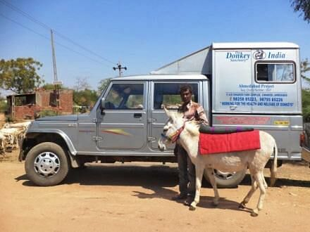 A donkey being led up to the mobile clinic