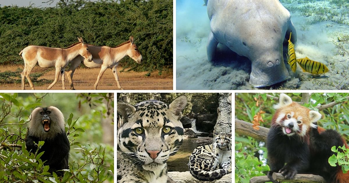 16 Lesser Known Species of Endangered Wildlife in India