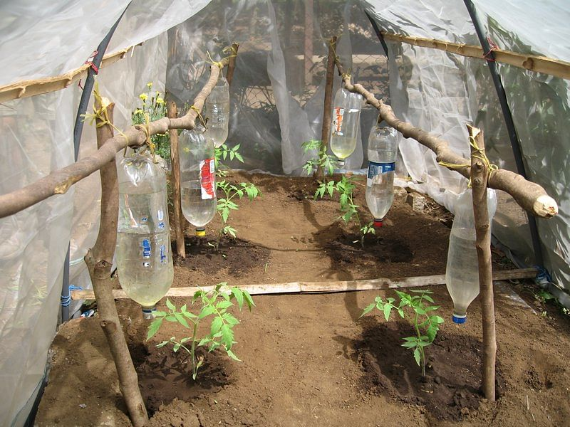 6327799-Drip_irrigation_through_plastic_bottles-0