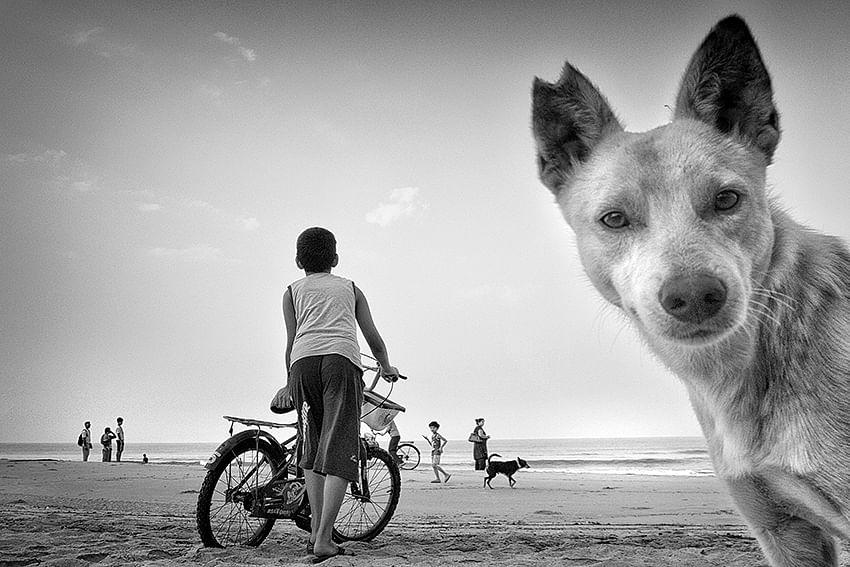 Dog selfie jpg pg