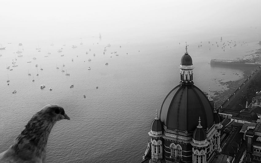 Taj-Birds-Eye-View.jpg-pg