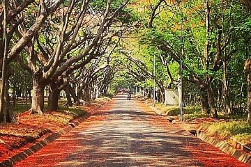 IISc Forest
