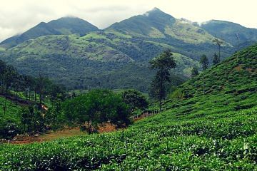 Carbon Neutrality Project - Wayanad