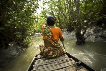 A woman rows through a dense canal to fish in the Sundarbans forest. The Sunderbans forest in Southern Bangladesh is the largest mangrove forest in the world. There are an estimated five hundred Royal Bengal tigers in the Sunderbans, and about fifty to sixty thousand people depend on the land, rivers and forest for their living. As climate change, hurricanes and cyclones continue to affect the area, the fresh water that once irrigated farmers fields has turned salty, rendering the fields useless. Many people live barely one meter above sea level. Because of rising sea levels and shrinking forest, humans and tigers are fighting for space. The farmers are forced into the forest to hunt for honey, fish, or collect crabs, putting them at risk for a tiger attack.